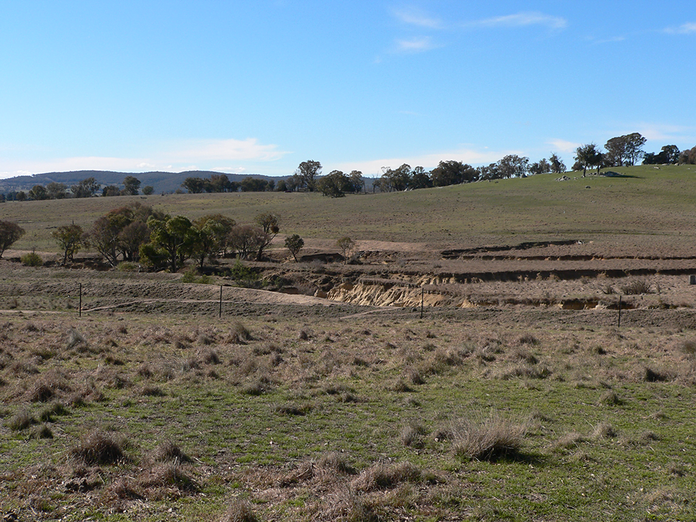 The gullies at Mt Henry have been fenced off, stock has been excluded and plans are underway to revegetate the areas during Spring 2013.