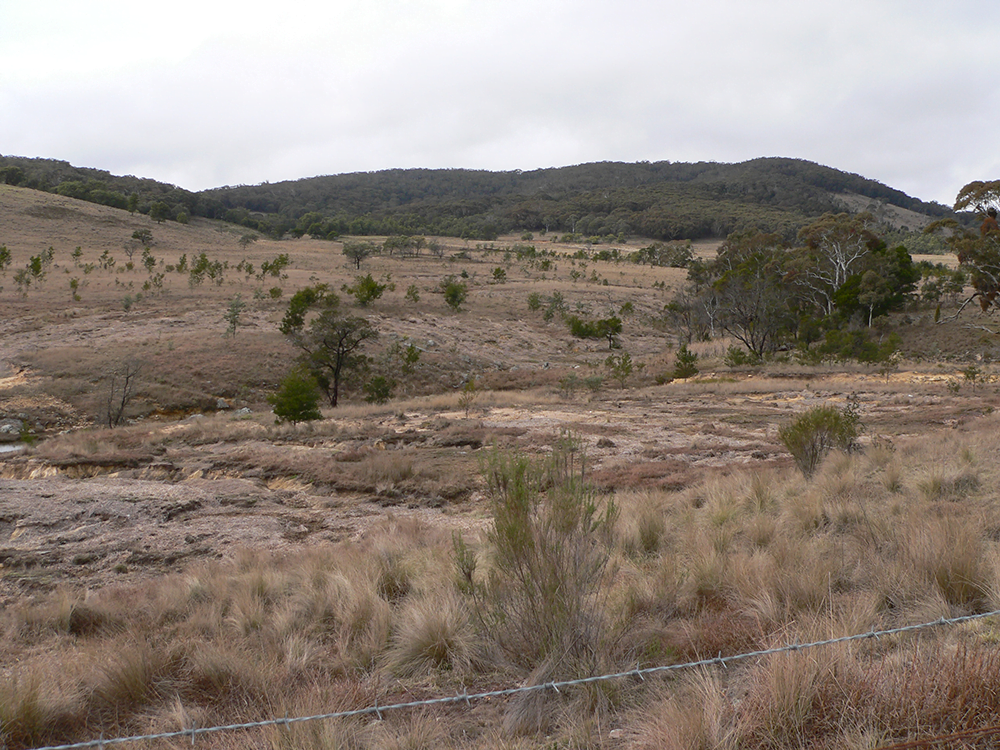 With funding from Greening Australian and the Lachlan Catchment Management Authority, Margie fenced off this riparian area during 2007 and spread hay bales on the eroded areas during 2012 to act as a mulch and encourage the establishment of some ground cover.